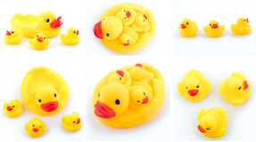 Rubber ducks isolated Stock Image
