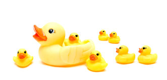 Rubber Ducks Isolated On White Background Stock Image
