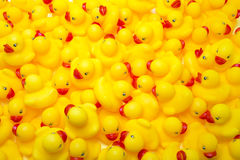 Rubber Ducks. A large group of rubber ducks Stock Images