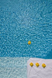 Rubber ducks in the pool royalty free stock photos