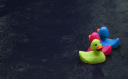 Rubber Ducks in Rainstorm. Bright colored rubber ducks floating on puddle in rainstorm royalty free stock photography
