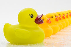 Rubber Ducks in a Row. Yellow rubber ducks lined up in a row Stock Photo