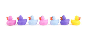 Rubber ducks in a row, with one headed to opposite directio. N - concept of individuality Stock Image
