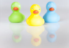 Rubber ducks. Selection of different color rubber ducks Stock Photography