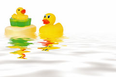 Rubber ducks  in water Royalty Free Stock Image