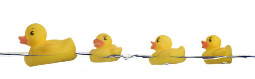 Rubber ducks in water Stock Image