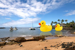 Rubber ducks on the water. Royalty Free Stock Photo