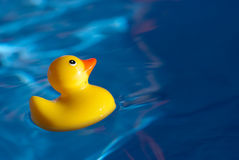 Rubber Ducky. Rubber Duck Floating in blue water Royalty Free Stock Images