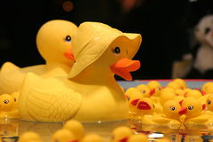 Rubber Ducky. Bright yellow rubber ducky floats with his buddies Royalty Free Stock Photo