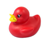Rubber ducky Stock Images