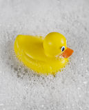 Rubber Ducky bathtime. Bathtime fun with a yellow rubber ducky in a bathtub full of water and bubbles stock photos