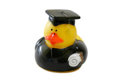 Rubber Ducky Graduating. Isolated on pure white background royalty free stock images