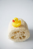 Rubber ducky on loofah. Single rubber ducky sitting comfortably on a loofah royalty free stock images