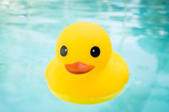 Rubber ducky Stock Photo