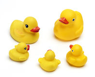 Rubber Duckys Royalty Free Stock Photo