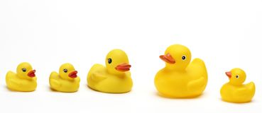 Rubber Duckys stock photography