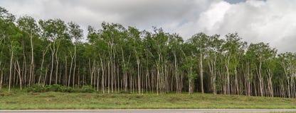 Rubber koloni som sett på vägen till ` Ivoire för Yamoussoukro Elfenbenskustenskjul D arkivfoton