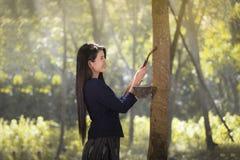 Rubber latex av gummiträdet Royaltyfria Foton