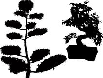 Rubber plant bonsai. Trees and conifers stock illustration