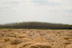 Rubber plantation and forest. Of Chanthaburi Thailand Stock Images