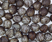Rubber seed Royalty Free Stock Images