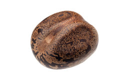 Rubber seed Stock Image