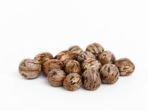 Rubber seeds Stock Photography