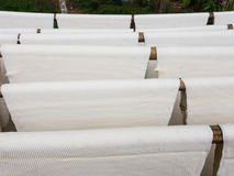 Rubber sheet Stock Images