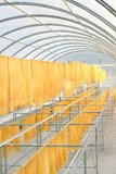 Rubber sheet in solar drying chamber Royalty Free Stock Photos