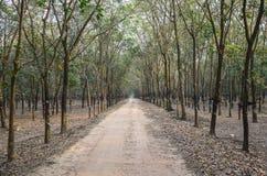 Rubber skog Royaltyfri Bild