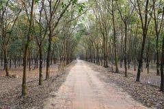 Rubber skog Fotografering för Bildbyråer