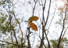 Rubber skog Royaltyfria Foton