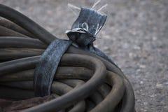 Rubber slangar begränsar med bandlögn på asfalten royaltyfri fotografi