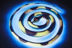 Rubber Snake Royalty Free Stock Photos