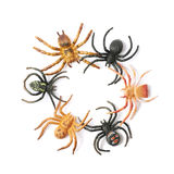 Rubber spider toy isolated Stock Photos