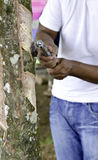 Rubber tapper tapping latex Royalty Free Stock Images