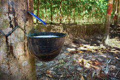 Rubber Tapping Royalty Free Stock Photography