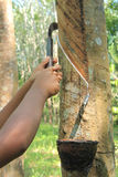 Rubber tapping Royalty Free Stock Photos