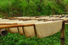 rubber thailand för koloni tree Arkivfoto