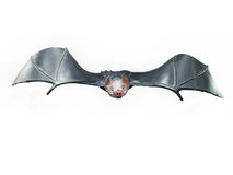 Rubber toy bat Royalty Free Stock Image