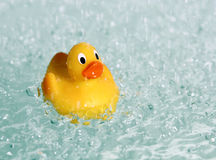 Rubber Toy Duck In Water Stock Photography