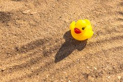 Rubber toy duck. Rubber yellow duckling is sitting on the beach in a bright sunny day. stock photos