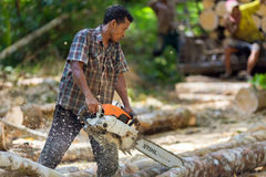 Rubber tree lumberjack with chainsaw Stock Images