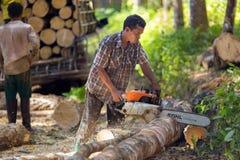 Rubber tree lumberjack Royalty Free Stock Photos