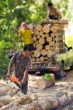 Rubber tree lumberjack Stock Photography