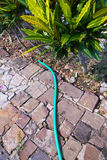 Rubber tube. Old rubber tube for watering plants on the way stock photography