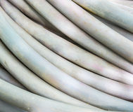 Rubber tube Stock Photography