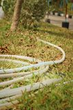 Rubber tube for watering plants on green grass. Stock Photography