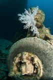 Rubber tyer on SS Thistlegorm in the red sea Royalty Free Stock Photography