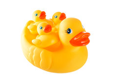 Rubber yellow duck family - mother duck and little ducky isolate Stock Image